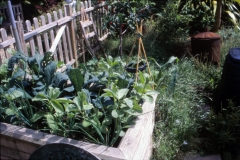 Plants grow well in the raised bed