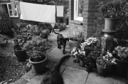 Bob and Beryl nipping about the garden