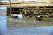 Splashing aroung the outfall