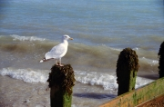 One seagull